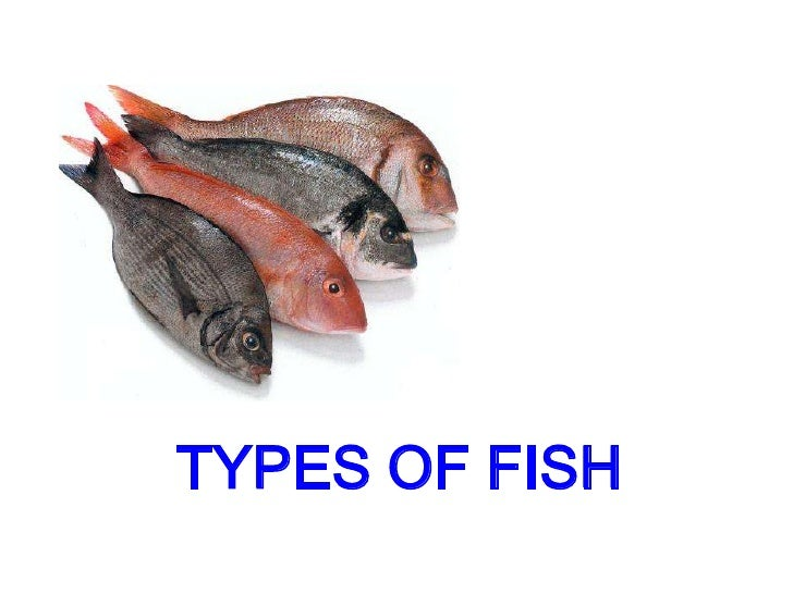 Types of fish for Types of fishing nets