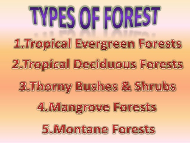 The common animals found in these forests are elephants, lemur, monkey, and deer. The one horned rhinoceros in the jungles...