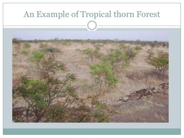forest types of sindh It is an initiative of the government of sindh, being implemented by the sindh forest department it has a target to plant and conserve 42,000 hectares mudflats and the adjacent land degraded by sea intrusion.