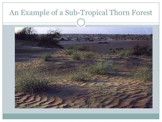 forest types of sindh Sindh has arid or semi-arid climate, through its coastal and riverine forests there  are fresh water lakes, mountains, and desert but in the irrigated indus valley.