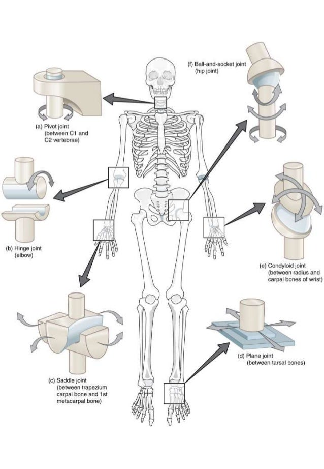 Awesome Anatomy: Joined Forces | Worksheet | Education.com