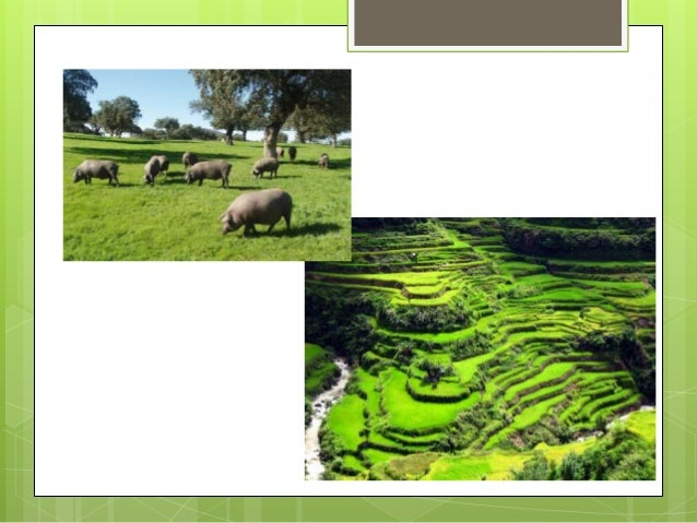 ... livestock regions; 3. Traditional landscapes ... - Types Of Landscapes