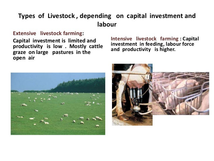 Types of Livestock , depending on capital investment and                            labourExtensive livestock farming:Capi...