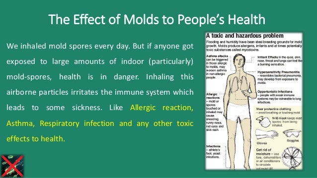 Harmful Effects Of Molds To People S Health