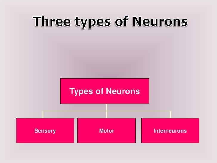 Types of neuron
