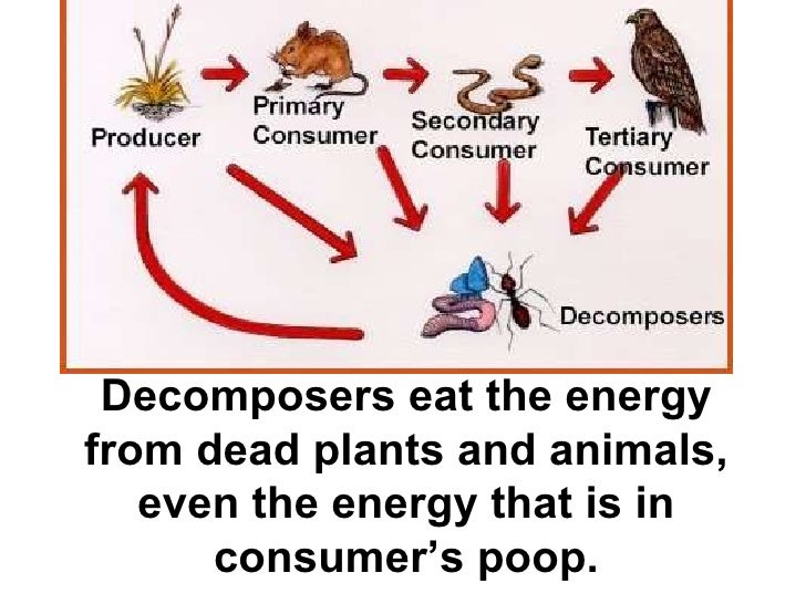 Desert Decomposers List Types of organi...