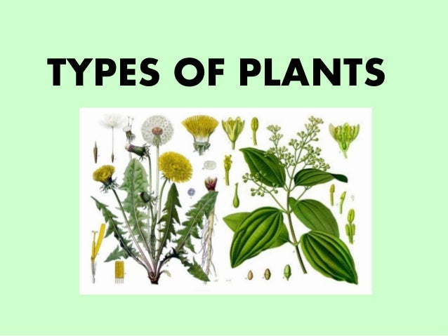 Types of plants for Different kinds of plants