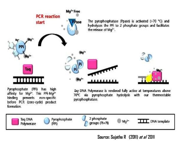 types of polymerase chain reaction The polymerase chain reaction collected by ernő zádor phd 2011 theoretical course: basic biochemical methods and ischemic heart models supported by: huro/0901/069.