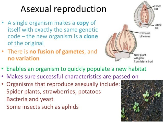 define asexual reproduction