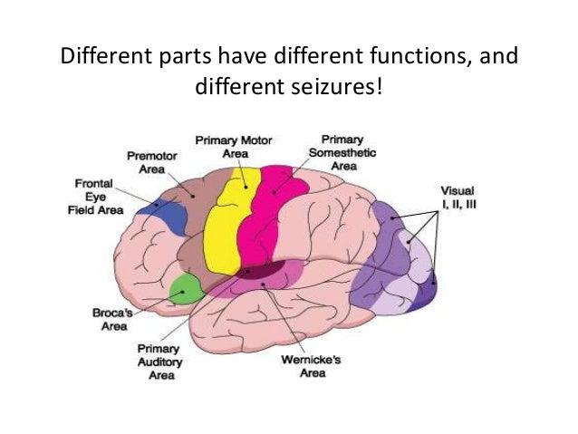 Types Of Seizure