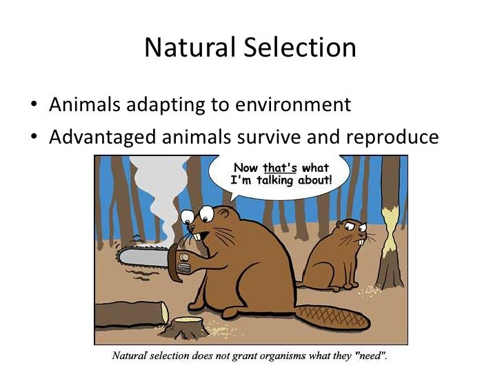 Natural Selection To Adaptation