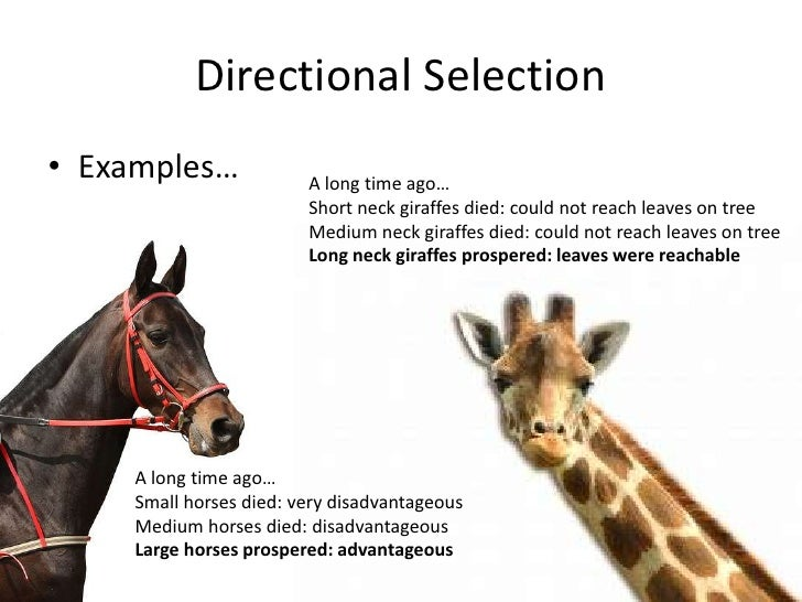 Natural Selection Types Of Selection Examples
