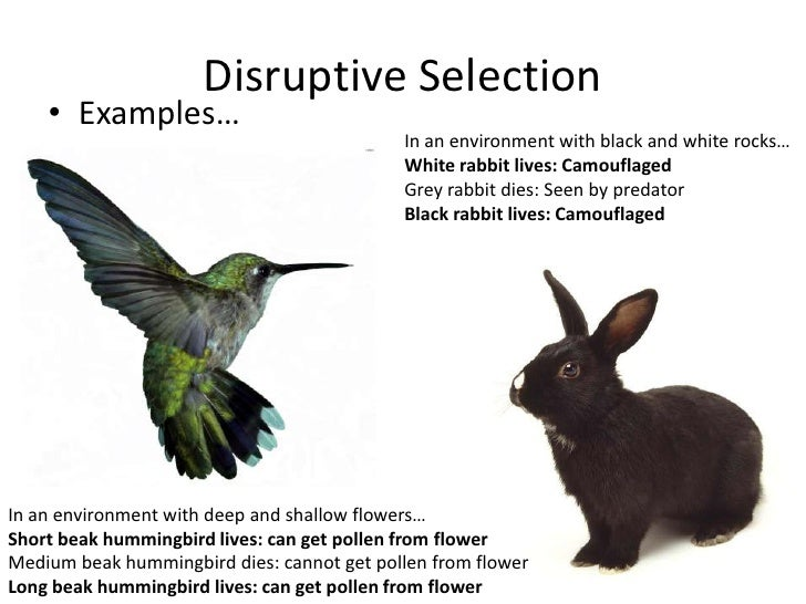 Natural Selection Examples Biology