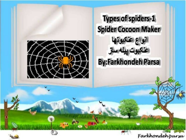 Types of  spiders 1,2,3