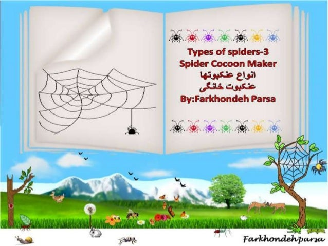 Types of  spiders ,4,5