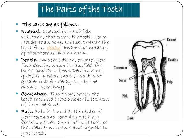 Types of teeth 3 ccuart Gallery