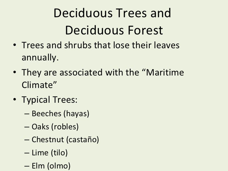 Deciduous Trees and  Deciduous Forest <ul><li>Trees and shrubs that lose their leaves annually. </li></ul><ul><li>They are...