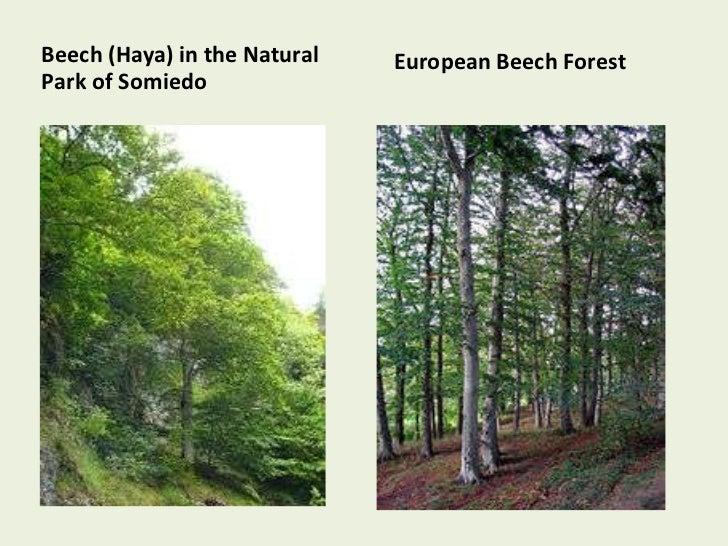 Types Of Trees In Spain