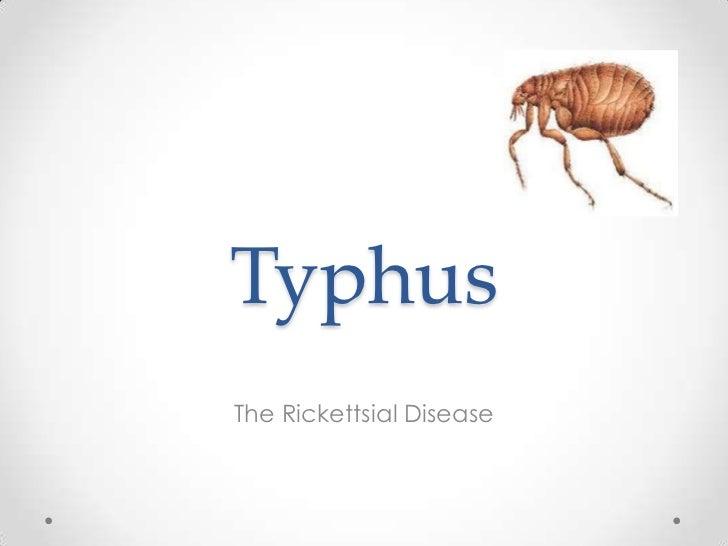 TyphusThe Rickettsial Disease