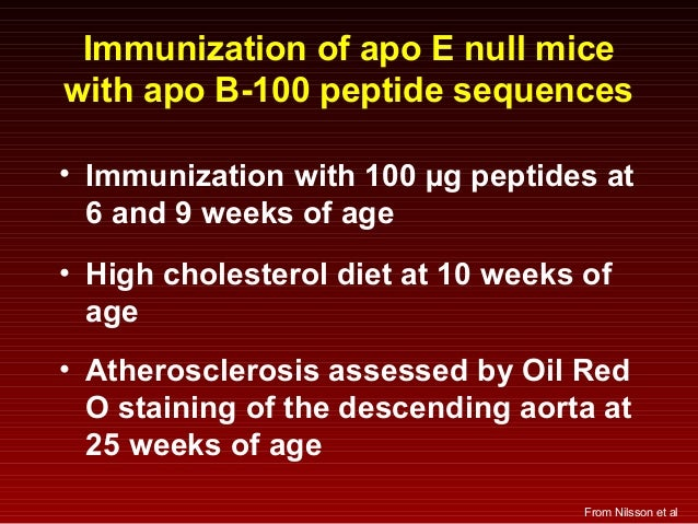 Immunization of apo E null mice with apo B-100 peptide sequences • Immunization with 100 µg peptides at 6 and 9 weeks of a...