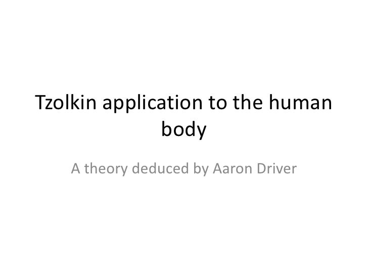 Tzolkin application to the human              body   A theory deduced by Aaron Driver