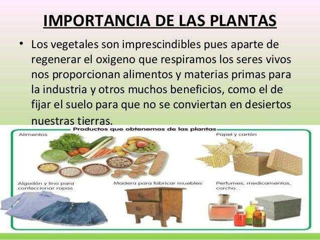 U 4 las plantas for Importancia de los viveros forestales