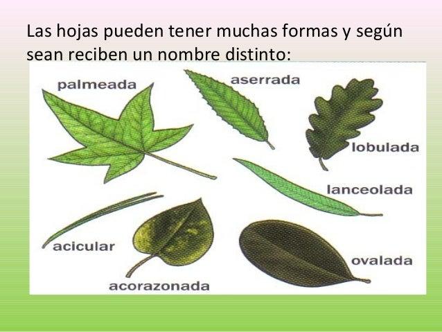 U 4 las plantas - Clases de flores y sus nombres ...