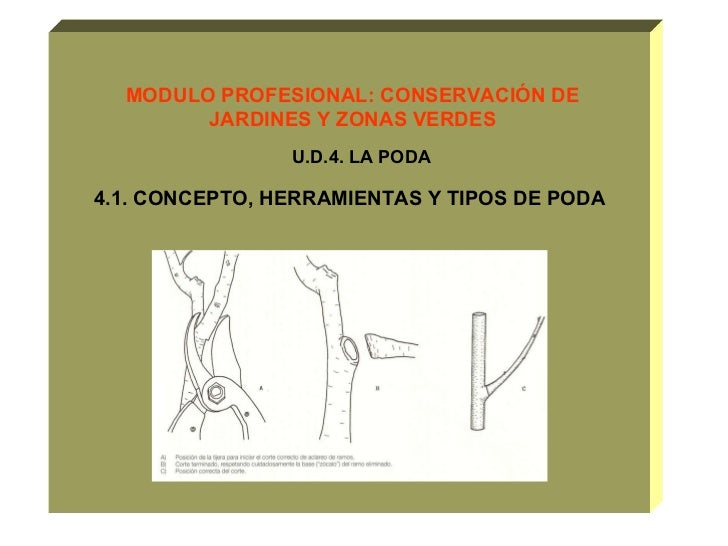 MODULO PROFESIONAL: CONSERVACIÓN DE JARDINES Y ZONAS VERDES U.D.4. LA PODA  4.1. CONCEPTO, HERRAMIENTAS Y TIPOS DE PODA
