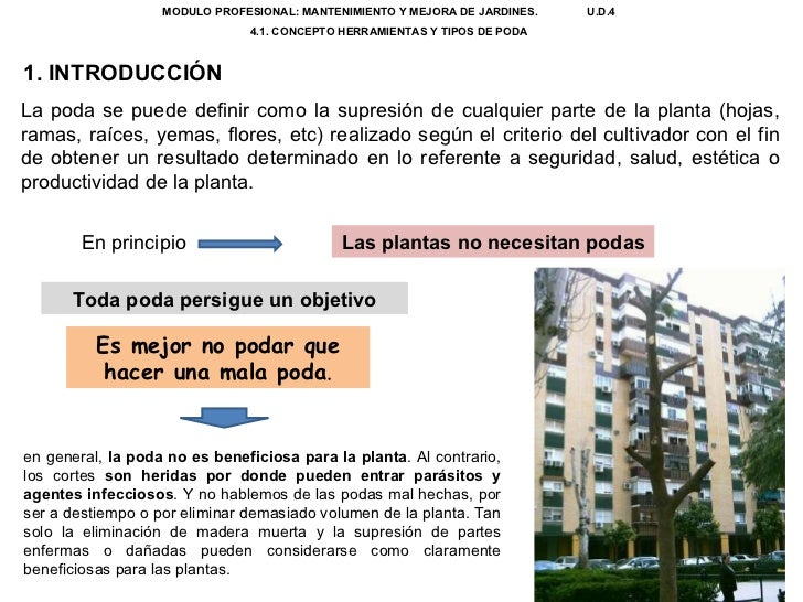 U.d. 4.1. la poda Slide 2