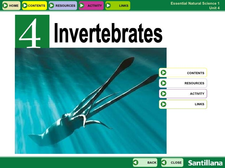 Invertebrates HOME RESOURCES ACTIVITY LINKS CONTENTS RESOURCES ACTIVITY LINKS CONTENTS CLOSE BACK