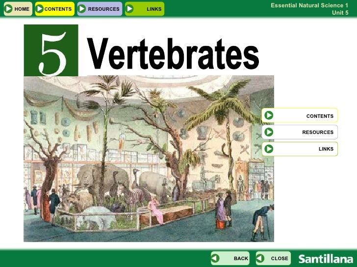 Vertebrates CONTENTS RESOURCES LINKS HOME RESOURCES LINKS CONTENTS CLOSE BACK