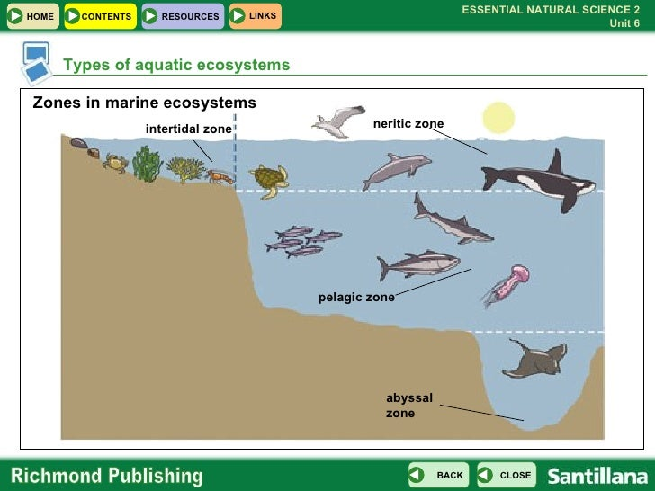 marine ecosystem essay Marine ecosystem topic test review seafood watch is a program that identifies sustainably harvested, ocean friendly seafood in order to _____  we will write a.