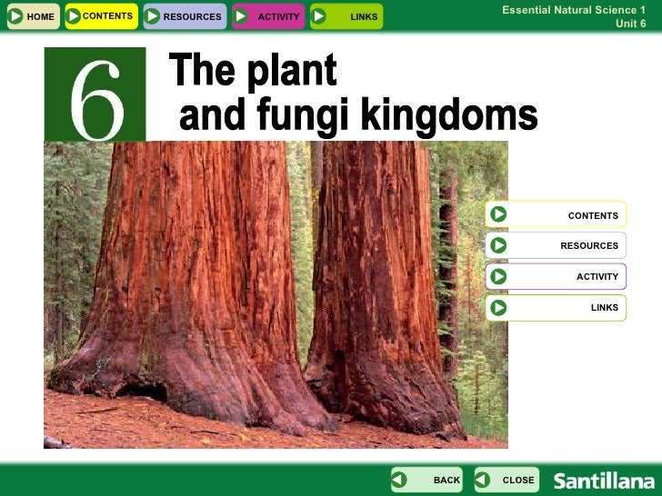 The plant and fungi kingdoms CONTENTS RESOURCES ACTIVITY LINKS HOME CONTENTS RESOURCES ACTIVITY LINKS CLOSE BACK