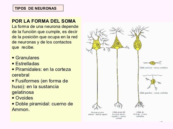 U 1 Celulas Del Sistema Nervioso