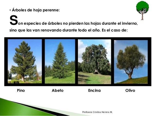 U 1 tema 1 clases de plantas for Arboles de hoja caduca y perenne nombres