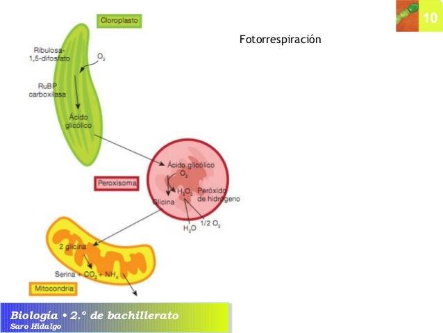 Metabolismo del farmaco