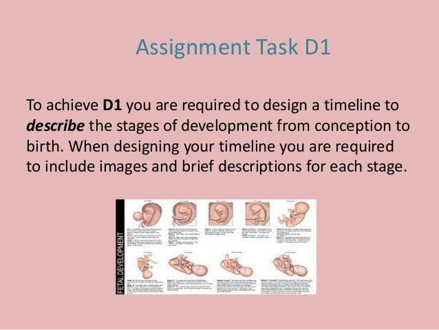 To achieve D1 you are required to design a timeline to describe the stages of development from conception to birth. When d...