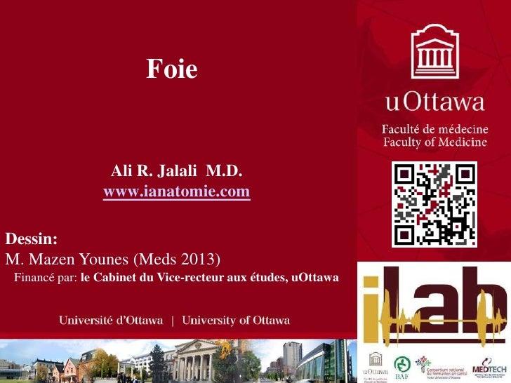 Foie<br />Ali R. Jalali  M.D.<br />www.ianatomie.com<br />Dessin:  <br />M. Mazen Younes (Meds 2013)<br />Financé par: le ...