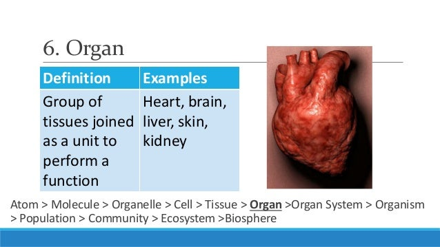 Organ System Definition – defenderauto.info
