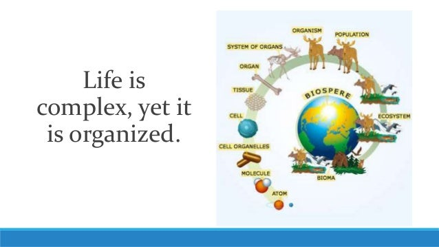 Life is complex yet it is organized.