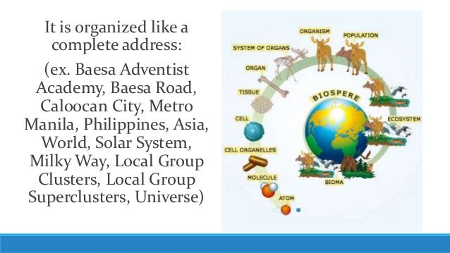 Unit 3, Lesson 3.2 - Levels of Biological Organization