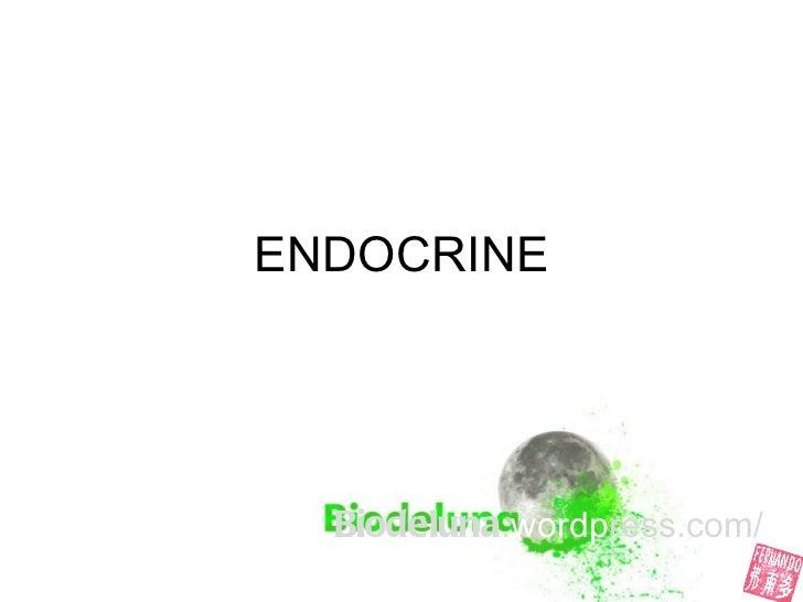 U4 endocrine system-fernando