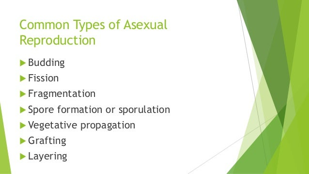 Sporulation asexual reproduction advantages