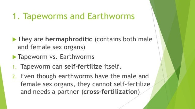 Asexual reproduction in fish tapeworm