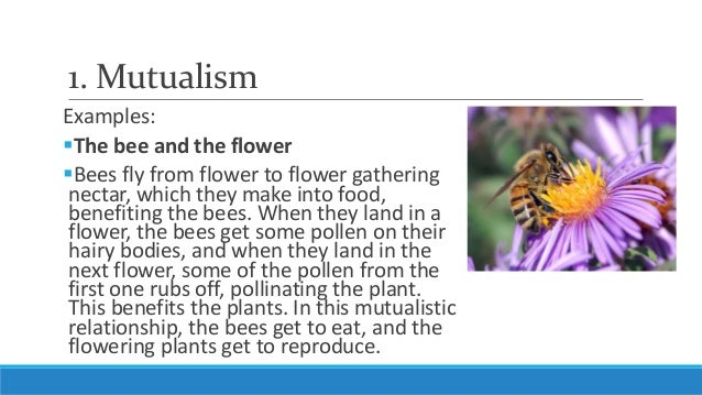 Unit 5, Lesson 5.3- Ecological Relationships