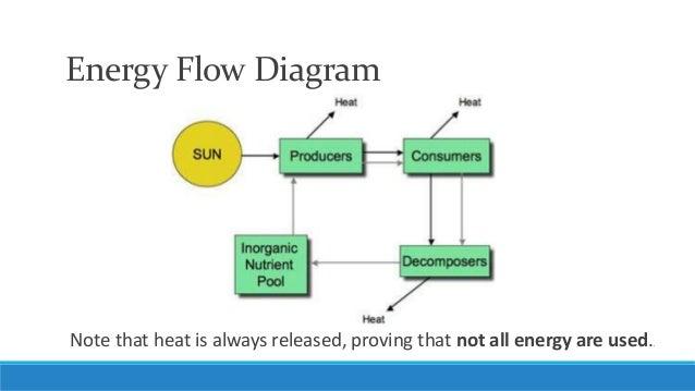 Unit 5, Lesson 4- Energy Flow in Ecosystem
