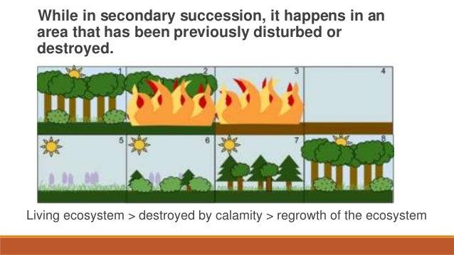 Unit 5 Lesson 57 Ecological Succession