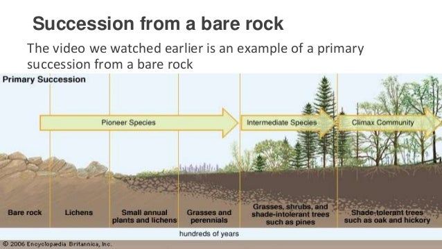 a study of ecological succession Ecological succession: ecological succession, the process by which the structure of a biological community evolves over time.