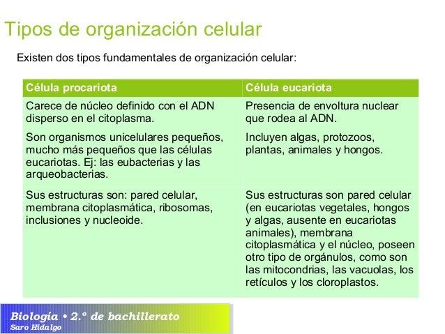 U5 organizaci n celular de los seres vivos la c lula - Tipos de hongos en la pared ...