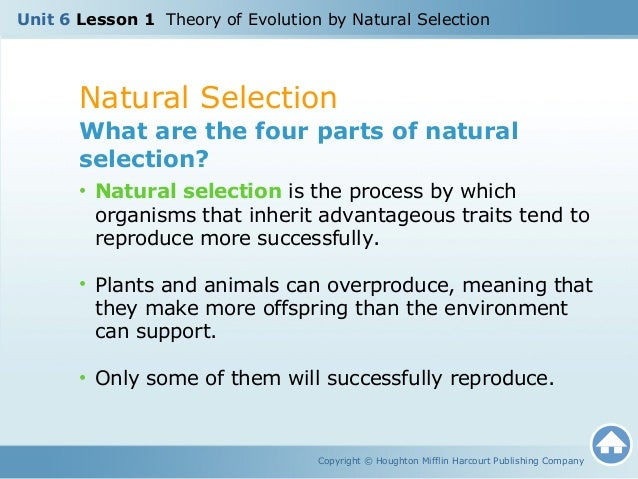 What Are The Four Parts Of Natural Selection